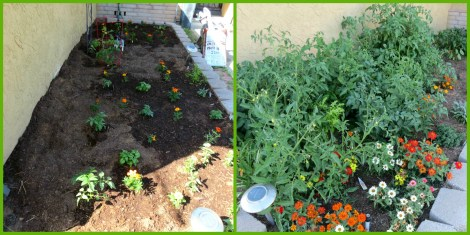 Before and After Garden
