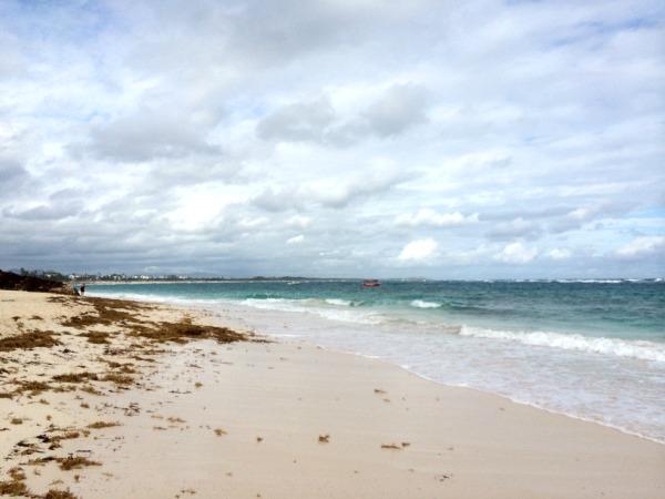Majestic Colonial Resort Beach Seaweed