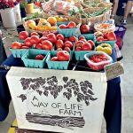 7 Favorite Foodie Spots in Charlotte