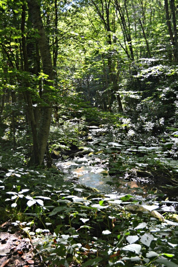 Profile Trail Creeks