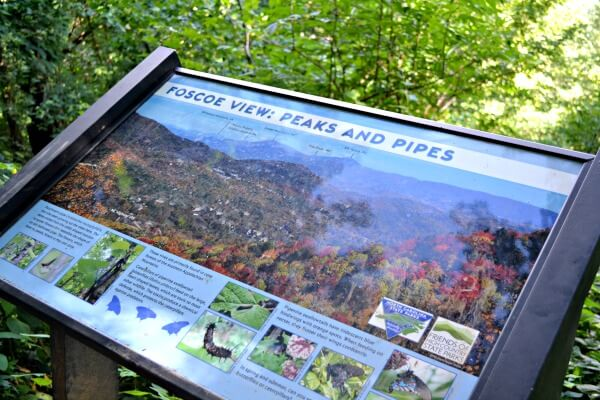 Hiking the Profile Trail on Grandfather Mountain to Calloway Peak