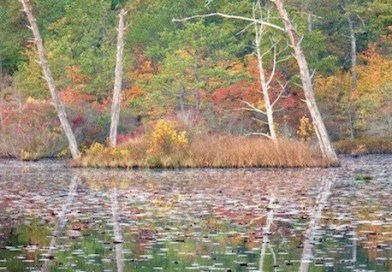 Peconic Estuary Program Kicks Off Fall Events With National Estuaries Week