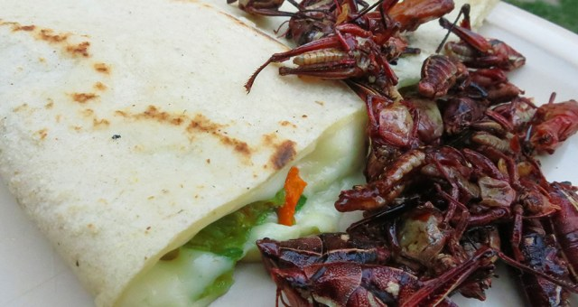 Oaxaca City Cuisine: Chocolate, Cheese and Grasshoppers