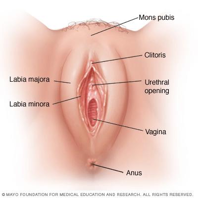 vaginal skin tags
