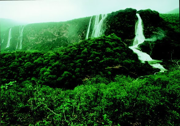 Salalah, Oman. Photo: not me.