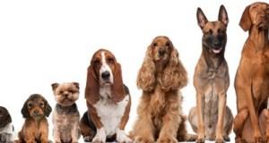 Mostra-nazionale-canina