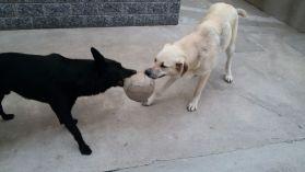 Jolie ed il suo amico Zeus