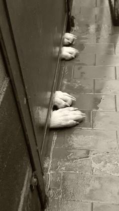 Buonanotte da chi sogna una casa, un posto al caldo dove passare l'inverno e da chi ha sempre una speranza di una via d'uscita..