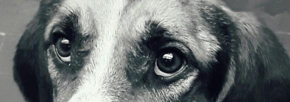 Homo sapiens: cosa leggi nei suoi occhi?