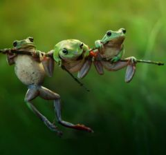 130685108851375781_Harfian-Herdi_Indonesia_Shortlist_Open_Nature-and-Wildlife_2015_2-w620