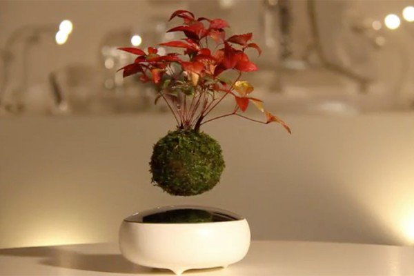 Air-Bonsai-600x400