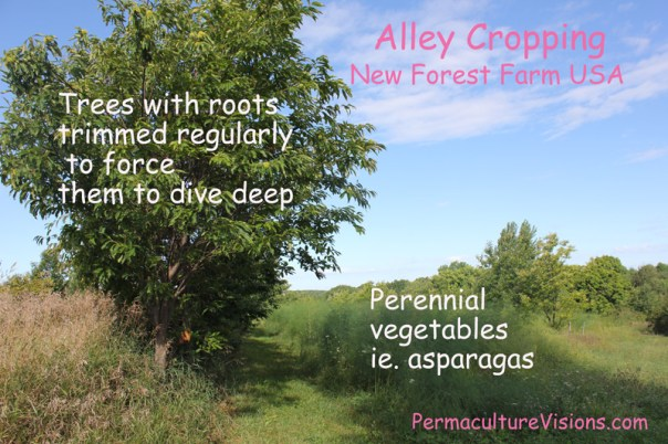 Alley cropping as demonstrated on New Forest Farm USA with Mark Shephard