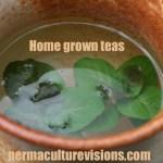 home-grown-teas