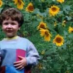 ryan sunflowers2
