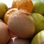 eggs and citrus