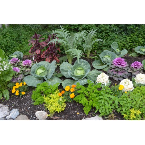 Medium Crop Of Vegetable Garden Planters Ideas