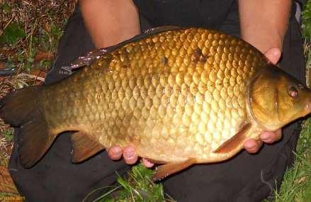 Pescuit La Feeder La Caras Primavara