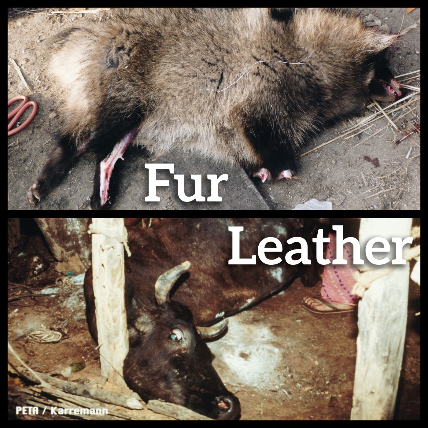 Fantastic Joke What Does Peta Stand Peta Stand Lear Fur Left To Die Lear Which Is What Do Letters nice food What Does Peta Stand For
