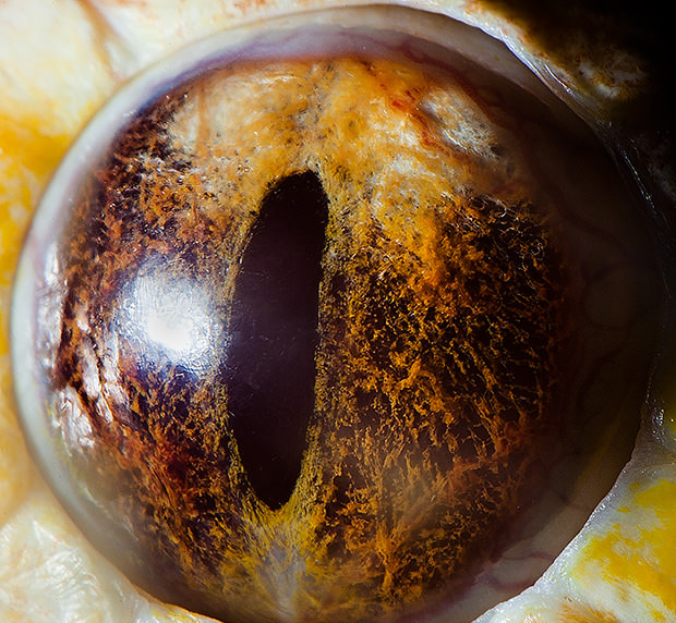 Amazing Macro Photos of Animal Eyes eye4 mini