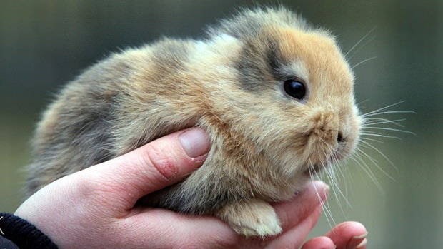 Photographer Steps On and Kills German Celebrity Earless Bunny til mini