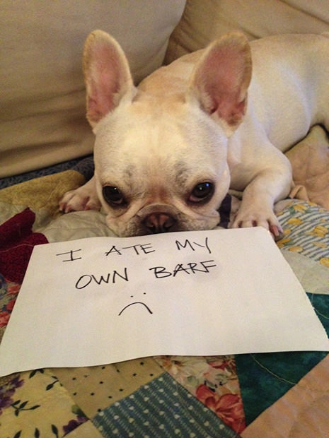 Dogshaming: A Viral Photo Craze Where Dogs Confess Their Bad Behavior dogshame1 mini