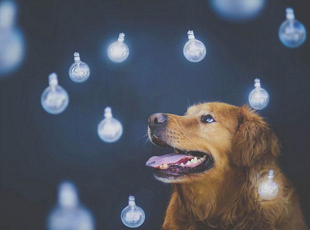 Teen Girl Shoots Beautiful and Creative Portraits of Her Pet Dogs dog4