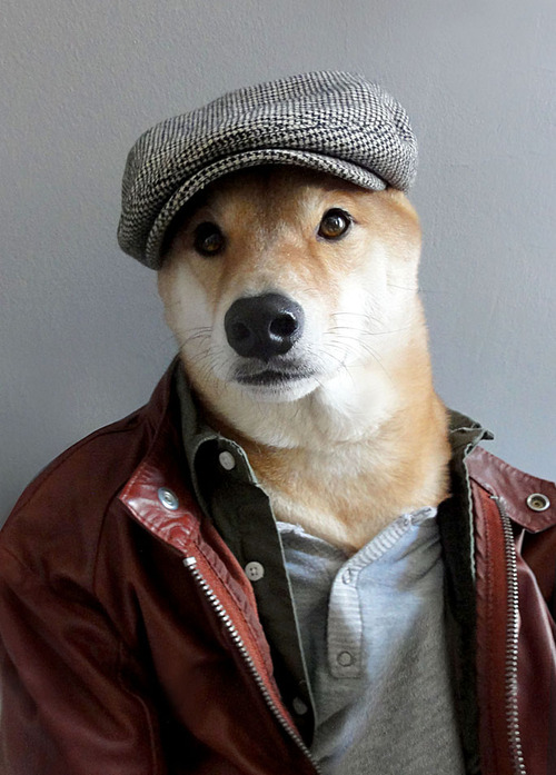 Menswear Dog Features Photos of Mens Fashion, Modeled by a Shiba Inu dogmenswear 2