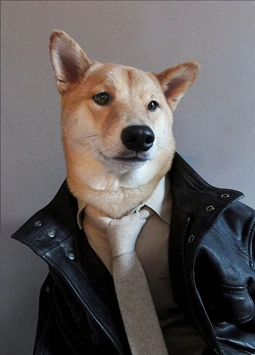 Menswear Dog Features Photos of Mens Fashion, Modeled by a Shiba Inu dogmenswear 4
