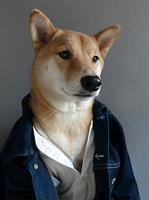 Menswear Dog Features Photos of Mens Fashion, Modeled by a Shiba Inu dogmenswear 8