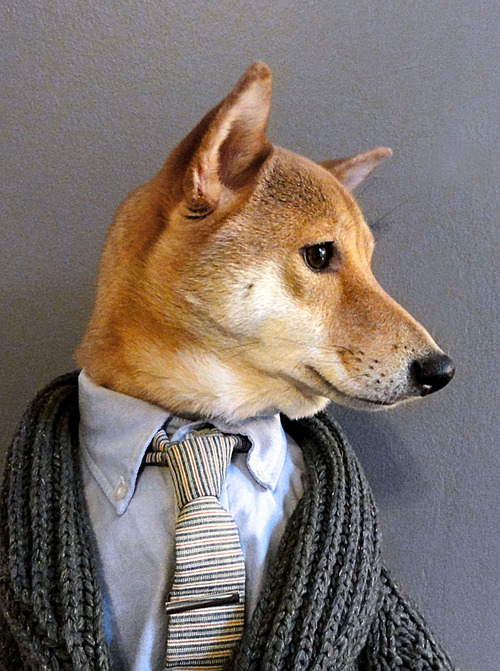 Menswear Dog Features Photos of Mens Fashion, Modeled by a Shiba Inu dogmenswear 9