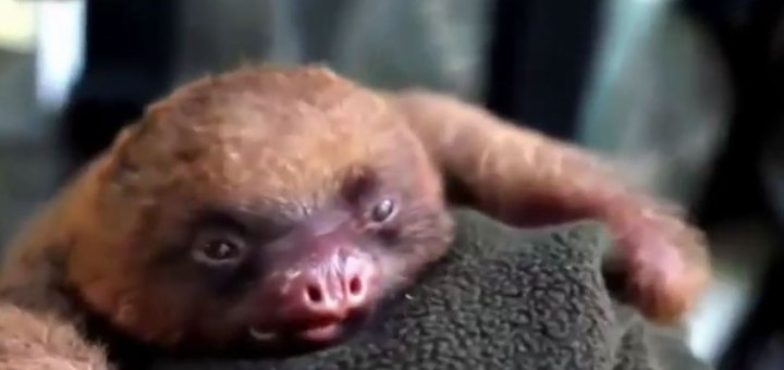 10 of the cutest baby animals