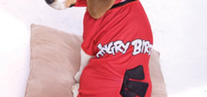 Angry Birds Red Dog