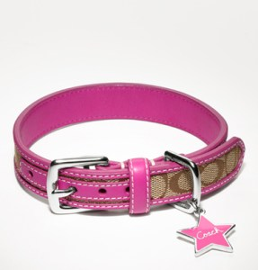 Coach Dog Collar