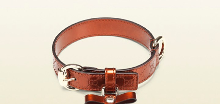 Gucci Dog Collar