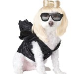 lady-gaga-dog