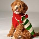 christmas_elf_sweater