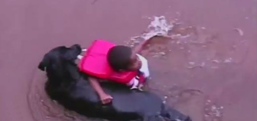 Dog rescues little boy playing in the water