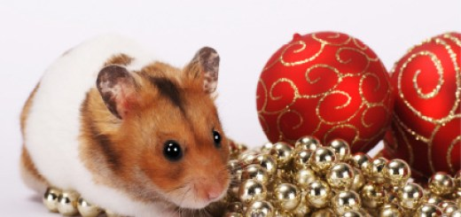 xmas hamster