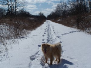 Scrappy wandering up the rail trail.