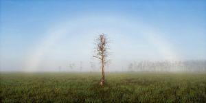 fogbow.jpg