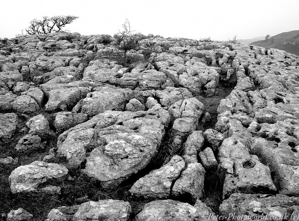 Limestone Pavement at Bryn Alyn