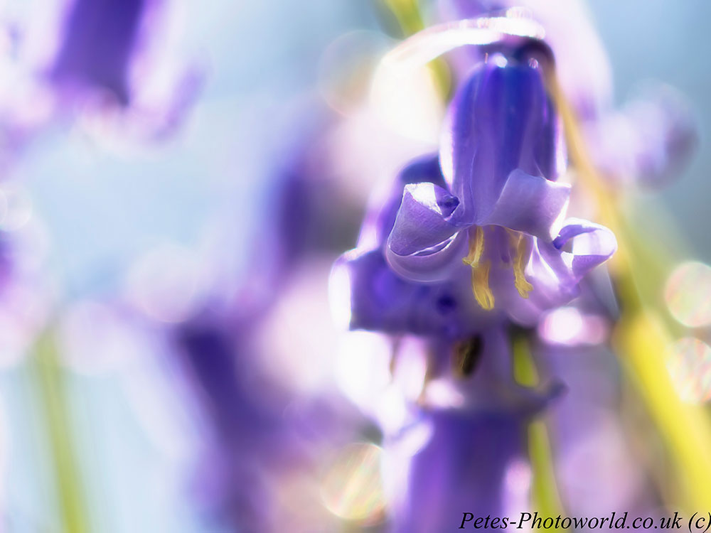 Blue Bells into the light and Topaz Glow