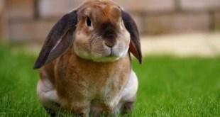 Rabbit Pet Business