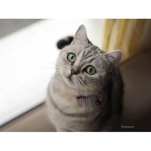 Medium Crop Of Cat Has Bad Breath
