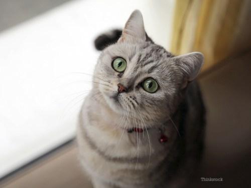 Medium Of Cat Has Bad Breath