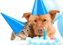 Pet Outfitters Birthday Club