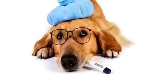 cachorro-doente-tratamento-doenca-enfermo-petrede