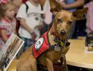 pet-rede-cachorro-terapeuta