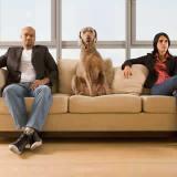 petrede-separacao-casal-guarda-cachorro