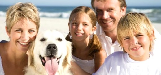 cachorro-labrador-praia-familia-petrede